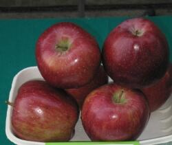 Top Red Delicious