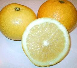 Pompelmo Mash Seedless nucellare
